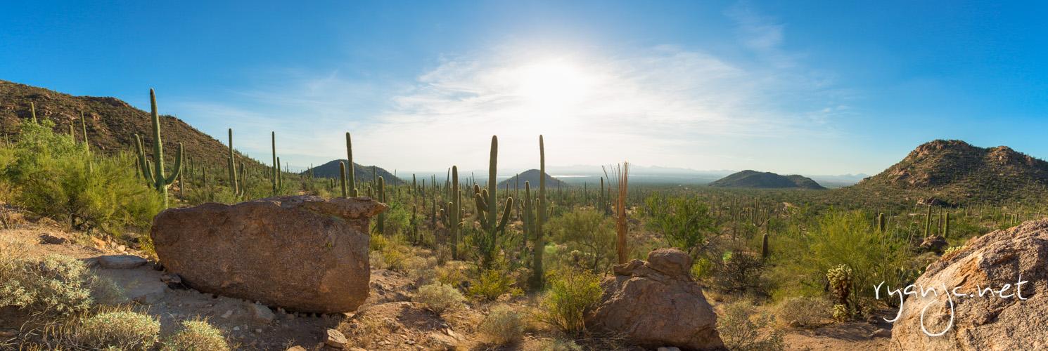 Saguaro National Park - Tucson, AZ